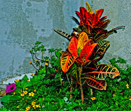 Arranjo de flor Fotografia de Stock