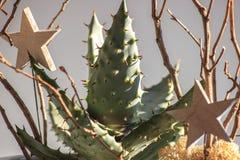 Arranjo de flor das plantas carnudas e dos galhos com a decoração no fundo cinzento Luz do contraste imagem de stock royalty free