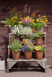 Arranjo de flores foto de stock