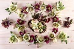 Arranjo de flores com as rosas quaresmais e os ovos da páscoa roxos brancos sobre a madeira clara foto de stock royalty free