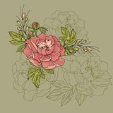 Arranjo de flores da peônia em um fundo verde foto de stock royalty free