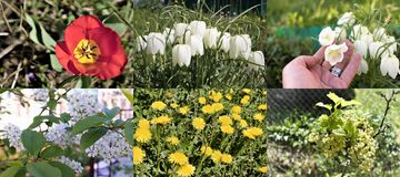 Arranjo de várias flores do jardim em um jardim rústico fotografia de stock