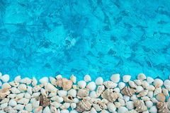 Arranjo decorativo de shell do mar em um fundo azul Imagens de Stock