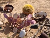 Arranjo do cacto do deserto Fotografia de Stock