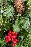 Arranjo dos ramo sempre-verdes com azevinho Fotografia de Stock Royalty Free