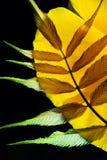 Arranjo em folha de palmeira colorido Fotos de Stock Royalty Free
