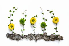 Arranjo floral com as flores coloridas no fundo branco Fotos de Stock