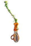 Arranjo floral da queda Imagem de Stock