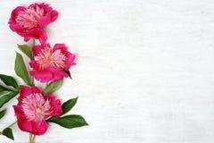 Arranjo floral das peônias Fotografia de Stock