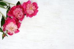 Arranjo floral das peônias Fotos de Stock Royalty Free