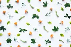 Arranjo floral no fundo branco Fotos de Stock Royalty Free