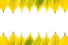 Arranjo sazonal de murchar o meio quadro das folhas Foto de Stock Royalty Free