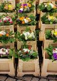 Arranjos de flor decorativos na venda Fotos de Stock Royalty Free