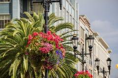 Arranjos de flor que penduram em cargos da iluminação, San Jose, Califórnia imagens de stock royalty free