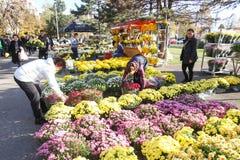 Arranjos florais Imagens de Stock Royalty Free