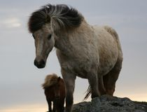 Arranque de cinta de caballos Fotos de archivo