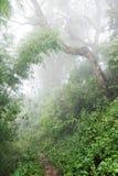 Arraste através da selva úmida nas montanhas Foto de Stock