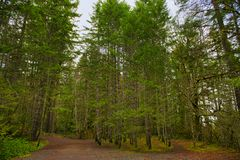 Arraste com folha da floresta na ilha de Vancôver, BC, Canadá Imagem de Stock Royalty Free