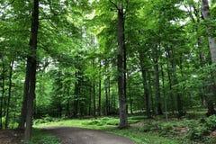 Arraste entre a floresta na reserva do parque estadual de Rockefeller durante a mola em New York Imagem de Stock