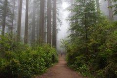 Arraste na floresta, parque nacional da sequoia vermelha, Califórnia EUA Fotos de Stock Royalty Free