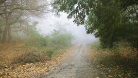 Arraste no outono da floresta com sons da natureza video estoque