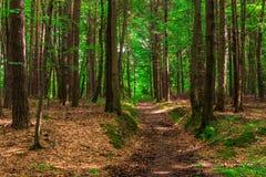 Arraste para caminhadas na floresta, disparando Imagem de Stock Royalty Free