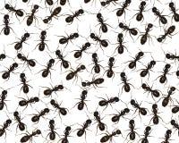 Arrastre con las hormigas fotografía de archivo libre de regalías