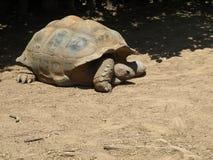 Arrastre gigante de la tortuga Fotografía de archivo
