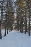 Arrastre la luz del sol al aire libre congelada luz de la escena de la belleza del día al aire libre sazonan el árbol de madera d Imagen de archivo