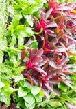 Array Of Bromeliad Vertical Garden. Stock Photos