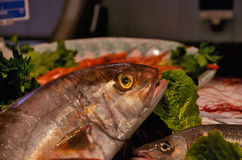 Variety of fresh fish seafood Royalty Free Stock Images