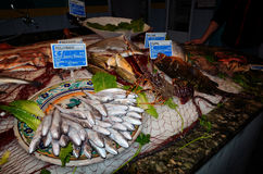 Variety of fresh fish seafood Royalty Free Stock Photography