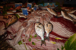 Variety of fresh fish seafood Stock Images
