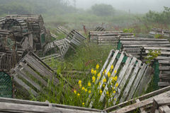 Array of lobster traps in Newfoundland and Labrador Royalty Free Stock Photography
