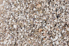 Array of seashells on the beach Stock Image