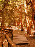 Arrayanes forest Royalty Free Stock Image