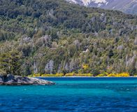 Arrayanes Forest with bright yellow flowers on shoreline. In Chile Royalty Free Stock Image