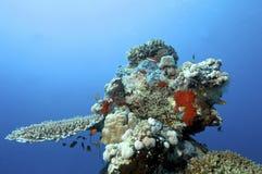 Arrecife de coral fotografía de archivo