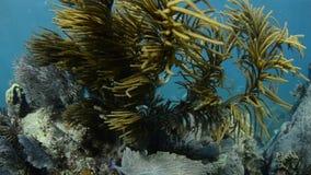 Arrecife de coral Imagenes de archivo
