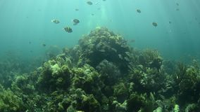 Arrecife de coral Imágenes de archivo libres de regalías