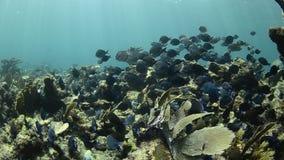 Arrecife de coral almacen de video