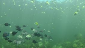 Arrecife de coral almacen de metraje de vídeo