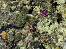 Arrecife de coral Fotos de archivo