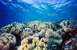 Arrecife de coral bajo Palau Micronesia Foto de archivo