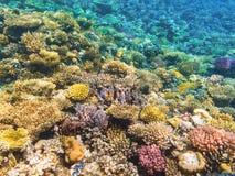 Arrecife de coral colorido con los corales duros Imágenes de archivo libres de regalías