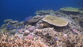 Arrecife de coral colorido con muchos pescados almacen de video