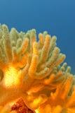 Arrecife de coral con el gran coral suave amarillo - subacuático Fotografía de archivo libre de regalías