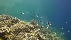 Arrecife de coral con los Butterflyfish y el pez papagayo metrajes
