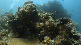 Arrecife de coral con los grupos de pescados amarillos metrajes
