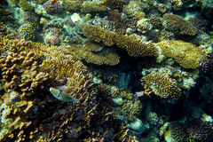 Arrecife de coral con los pescados Imagen de archivo libre de regalías